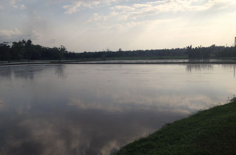 wastewater lagoon from a palm oil processing facility