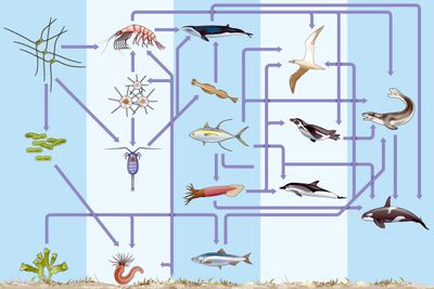 An intricate biogeochemical cycle or nutrient cycle underwater and on seabed in a marine ecosystem features many different complex organisms