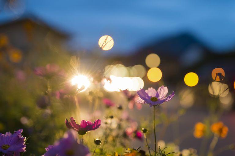 garden in moonlight