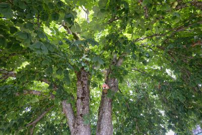 shot of large tree with huge lush leaf canopy and sunlight peaking through