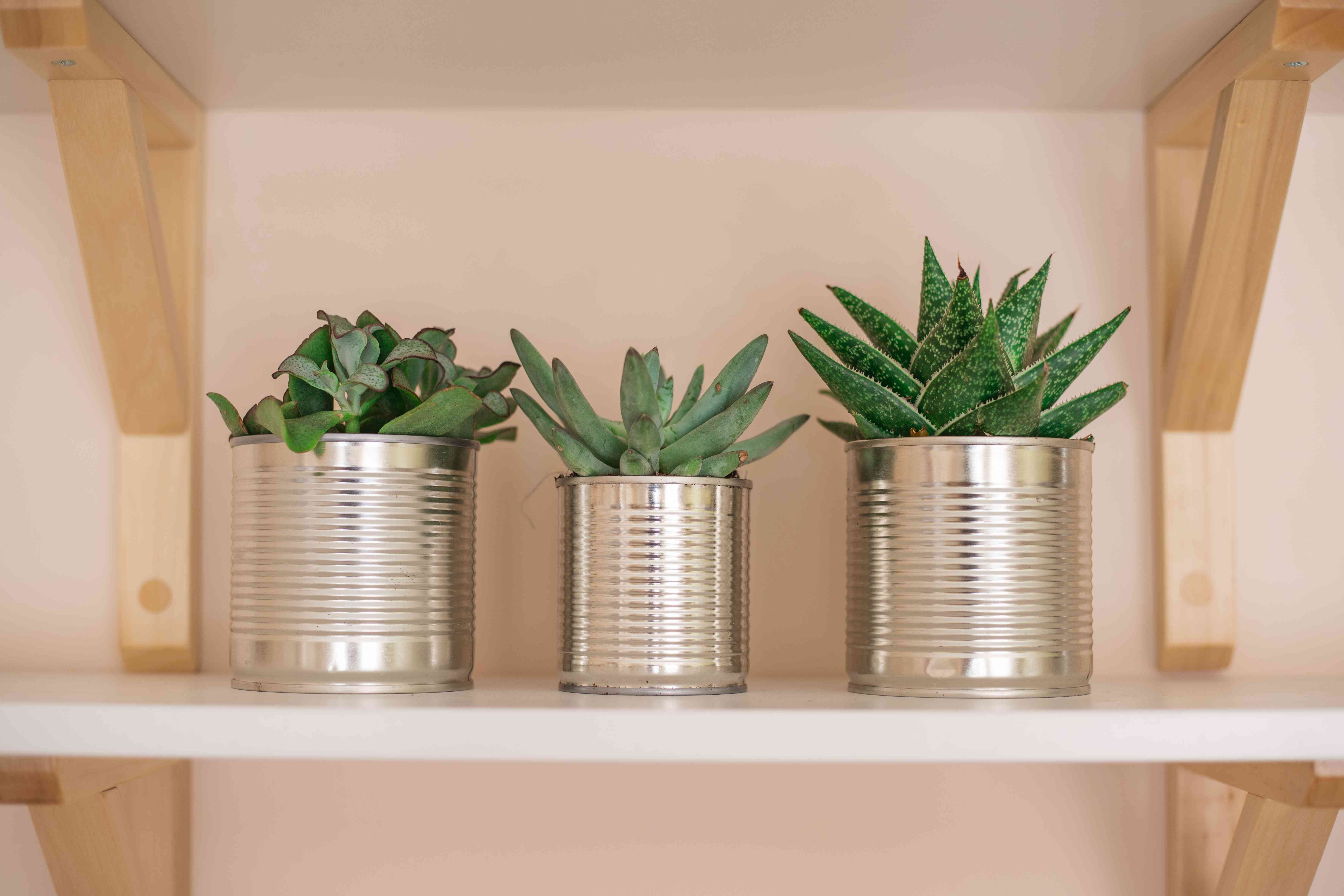 three succulents in upcycled aluminum can containers on white shelf with brackets