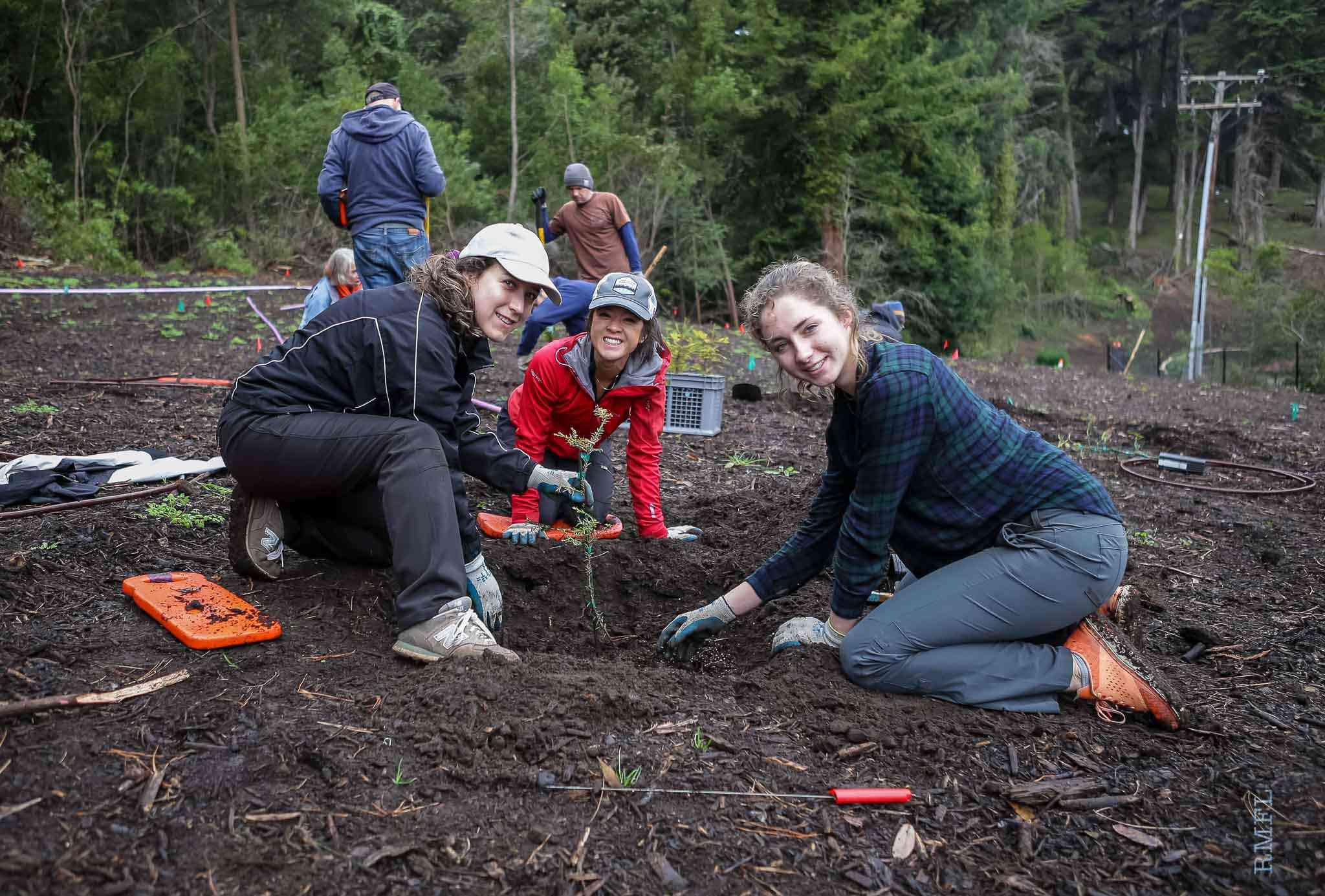 coast redwood planting in December 2018