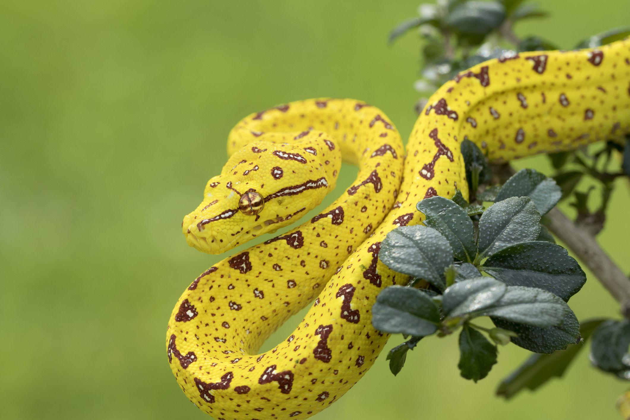 9 Gorgeous Snake Species Around the World