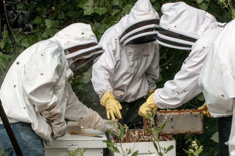 Las abejas dan a los ex prisioneros una nueva oportunidad