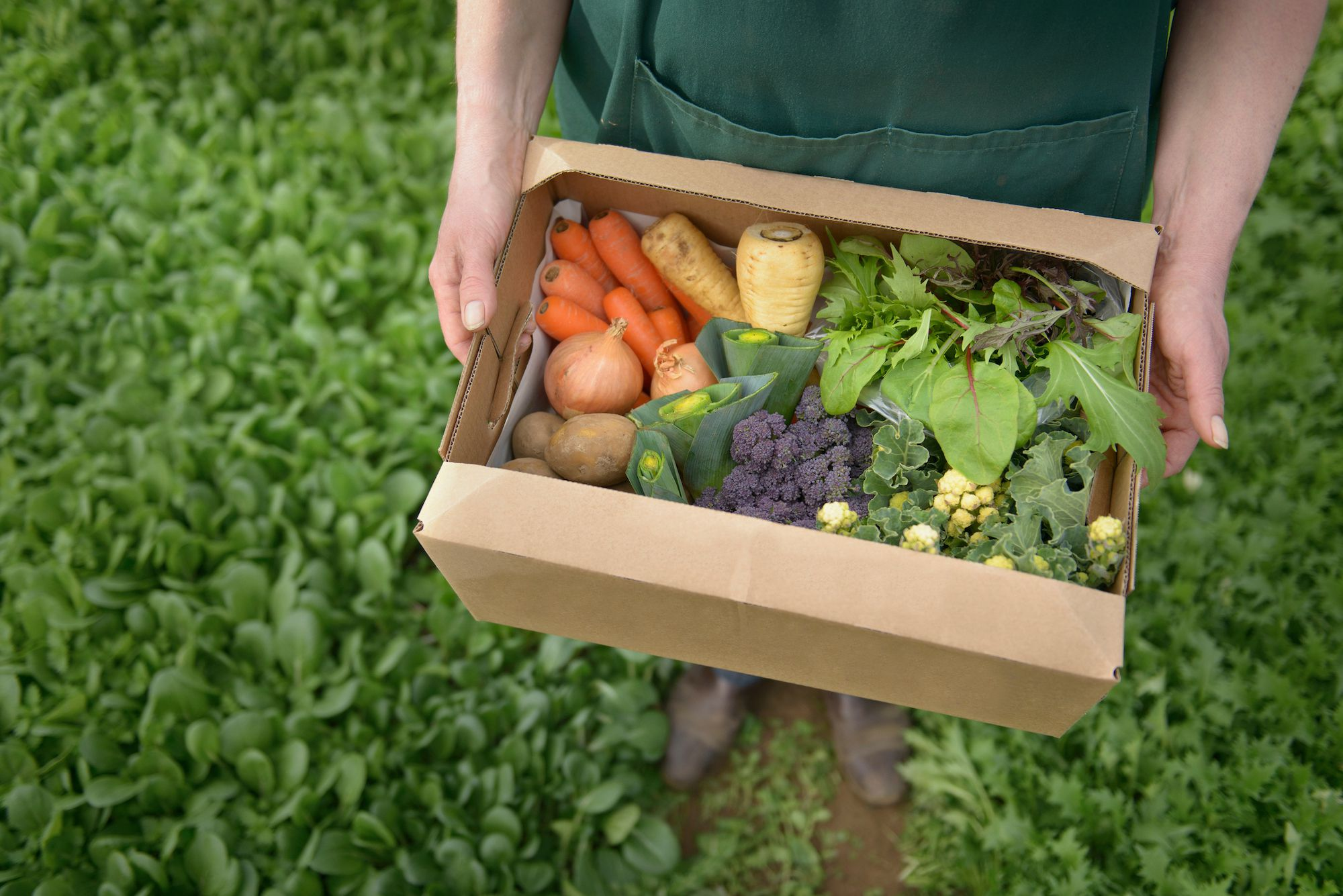 Local Vegetables Might Be Coming to Your Mailbox Soon
