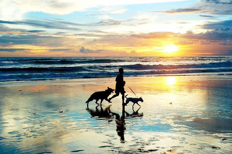 Walnut the Whippet da el último paseo por la playa rodeado de cientos de amigos