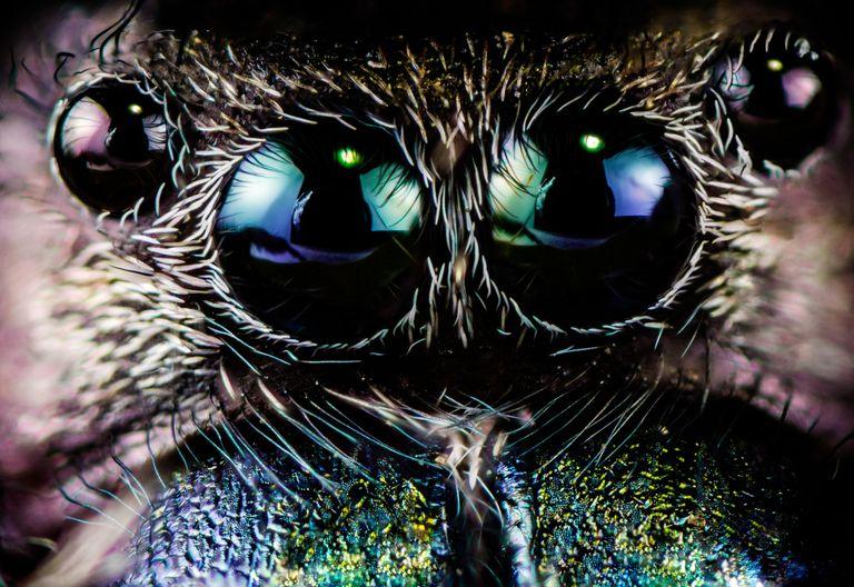 El cambio climático está haciendo que las arañas sean malas