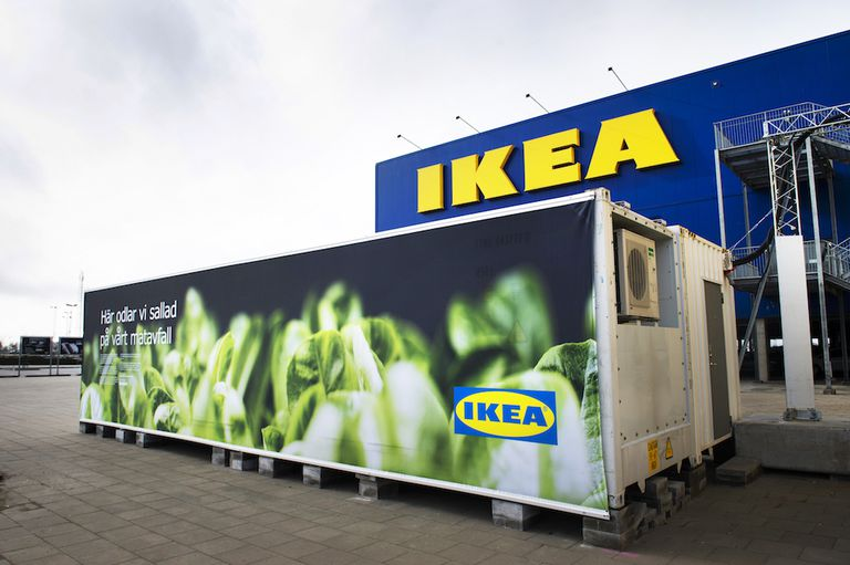 IKEA está cultivando lechuga para servir en sus restaurantes
