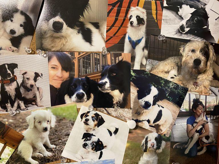 bulletin board of foster pets