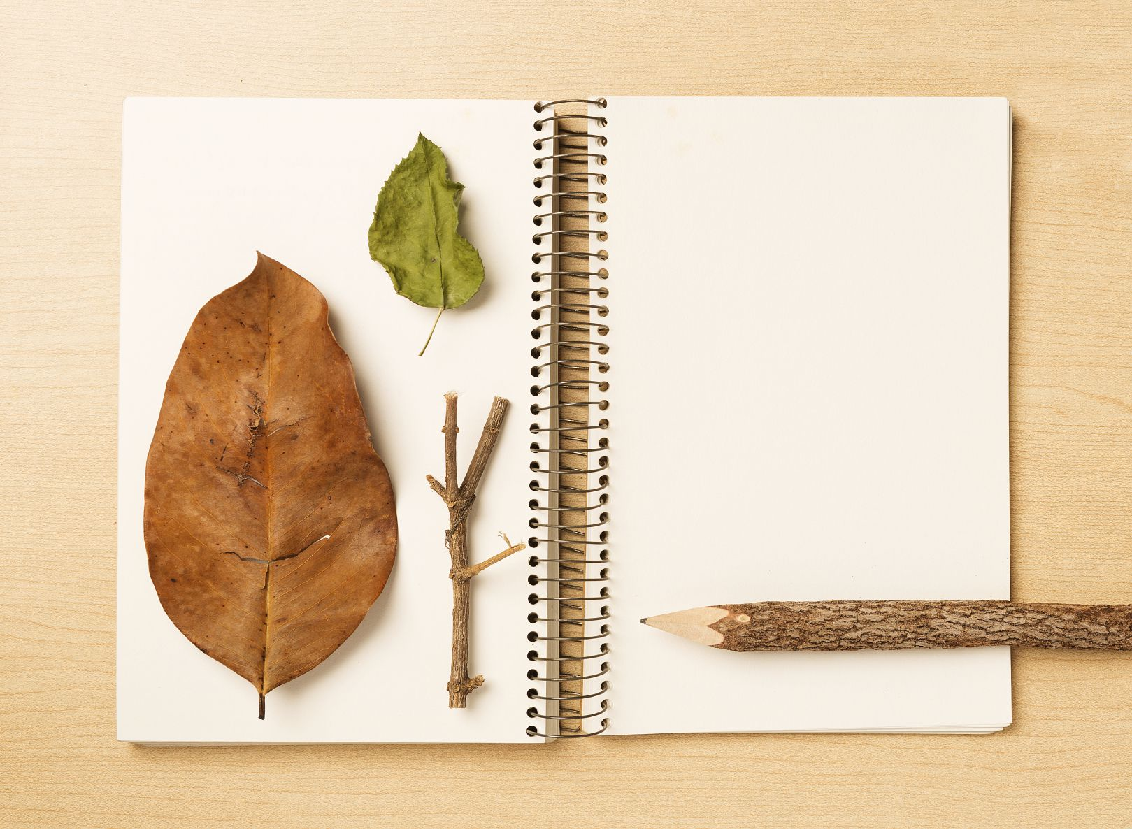 How to Keep a Nature Journal