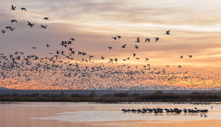 Flock of birds over a large body of water