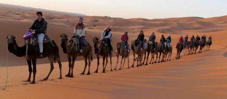 Tourists riding camels in the Sahara Desert