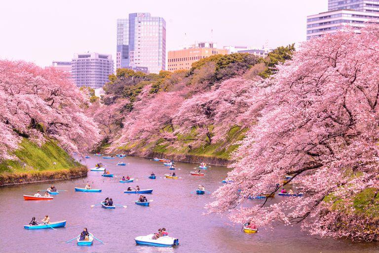 Cherry blossoms surrounding a quaint river
