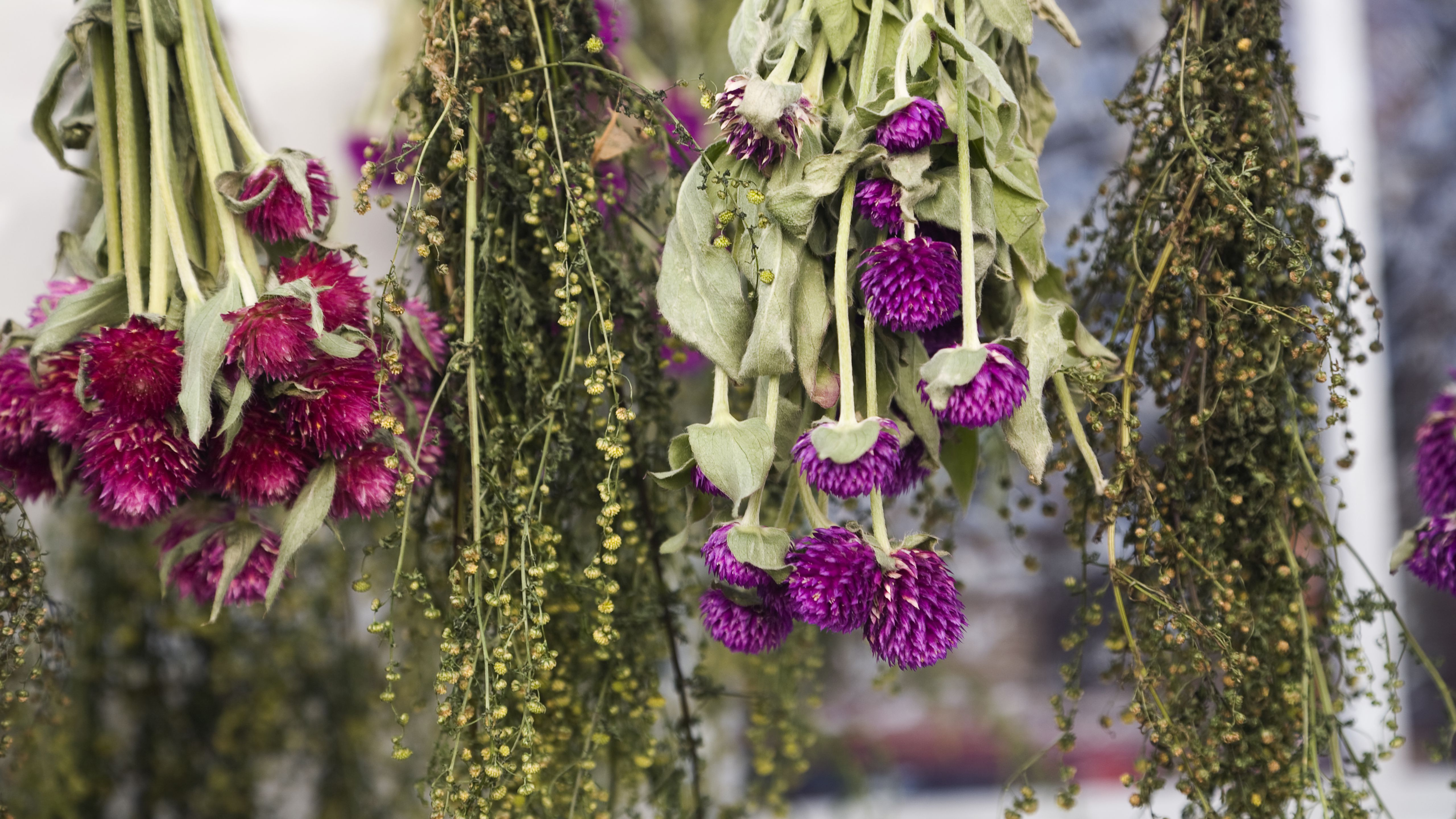 How To Dry Flowers And Preserve Their Color
