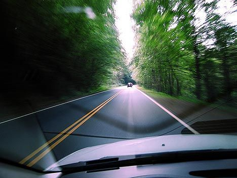 driving through the forest photo