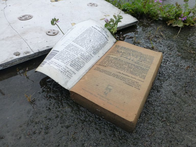 Wet book sitting on the ground