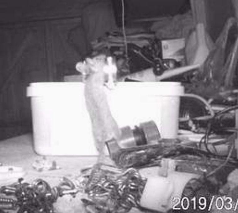 La cámara oculta revela la verdadera identidad de 'Ghost' en el cobertizo de herramientas del hombre del Reino Unido