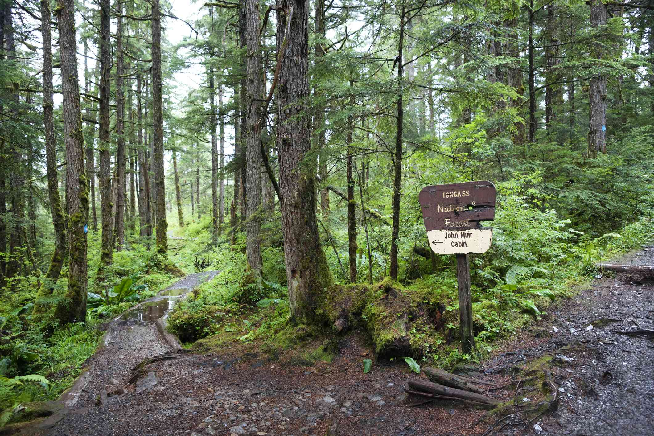 fork of two dirt paths leading past mossy trees and logs on a rainy day