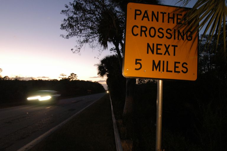 Panther crossing sign in Florida