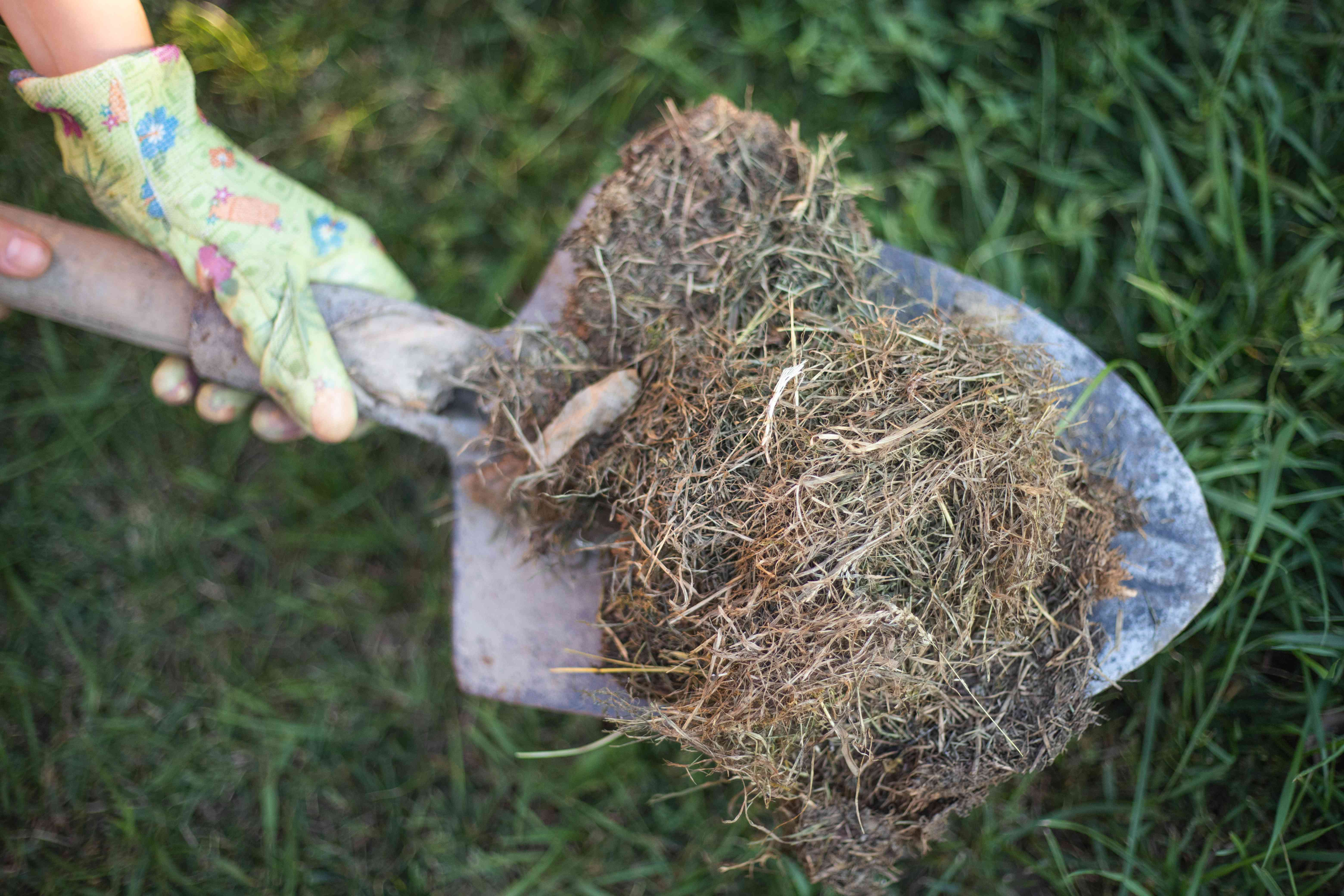 woman with shovel filled with dead grass and brown leaves for outside compost system