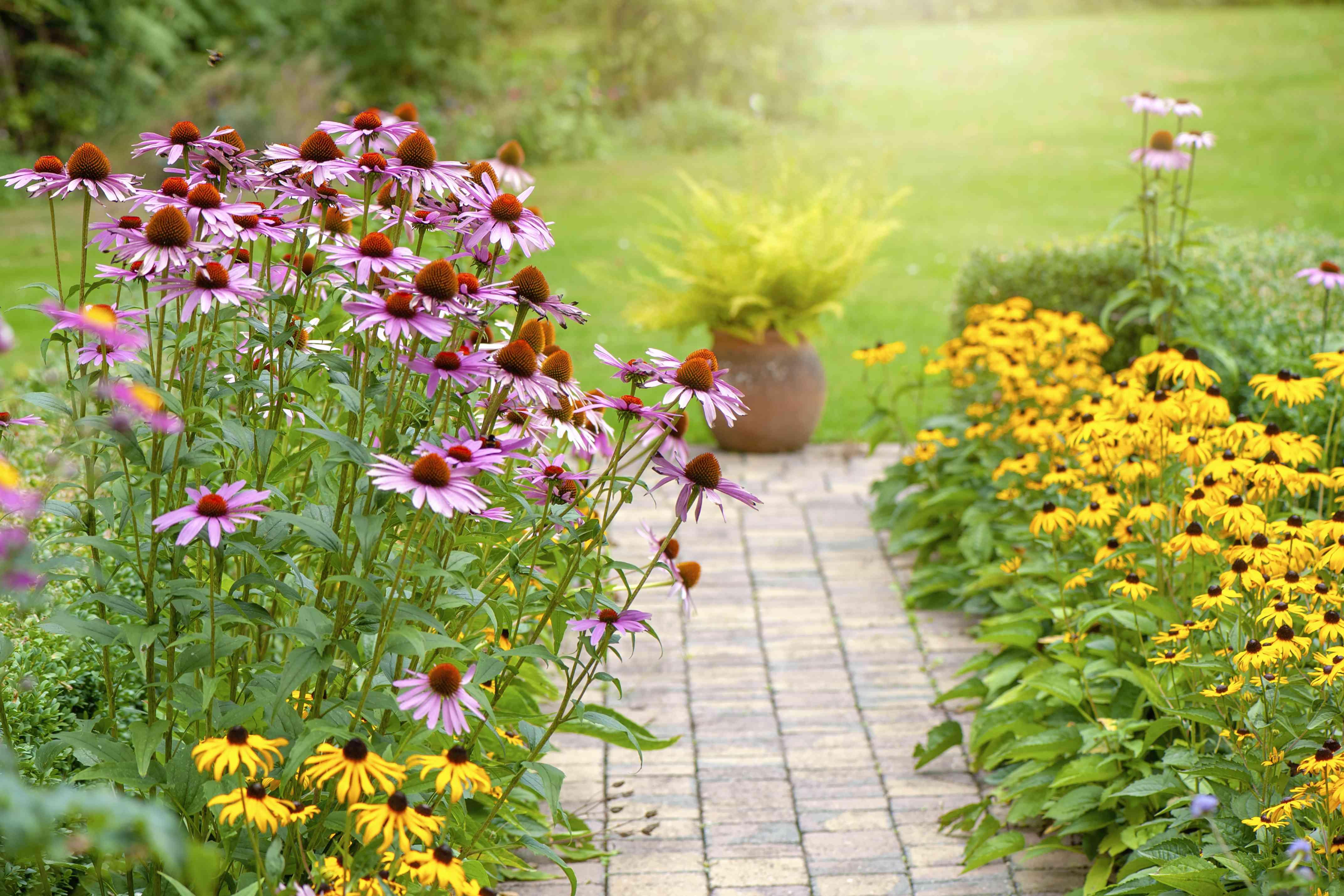 Beautiful summer garden flower border with Echinacea purpurea, Rudbeckia yellow coneflowers