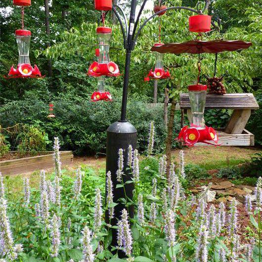 A variety of hummingbird feeders