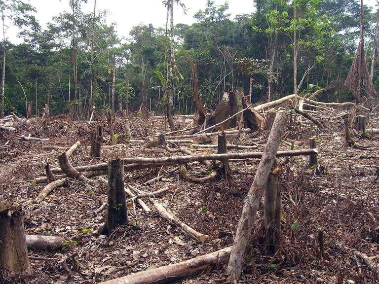 Kroger para crear y adoptar una política de no deforestación