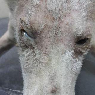 Close up of sick dog's face