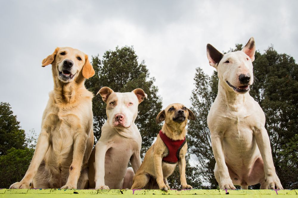 Where Is Your Dog on the Canine Family Tree?