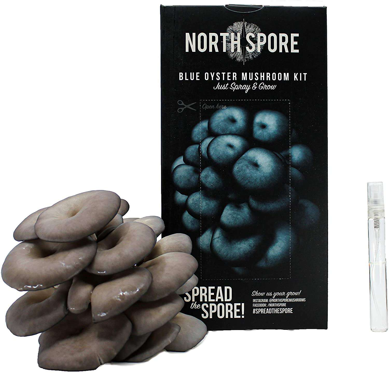 North Spore Blue Oyster Mushroom Kit