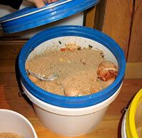 compost-in-bucket