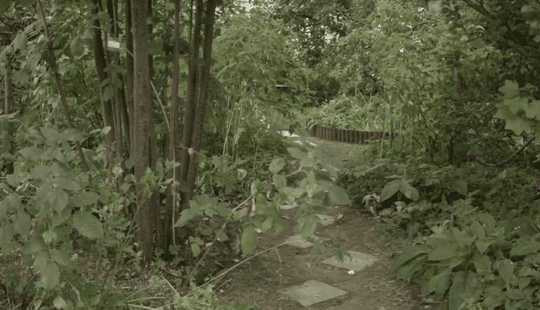 Cómo un pequeño jardín británico se convirtió en un bosque de alimentos maduro
