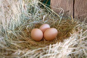 three brown farm fresh eggs sit on bed of hay in chicken coop