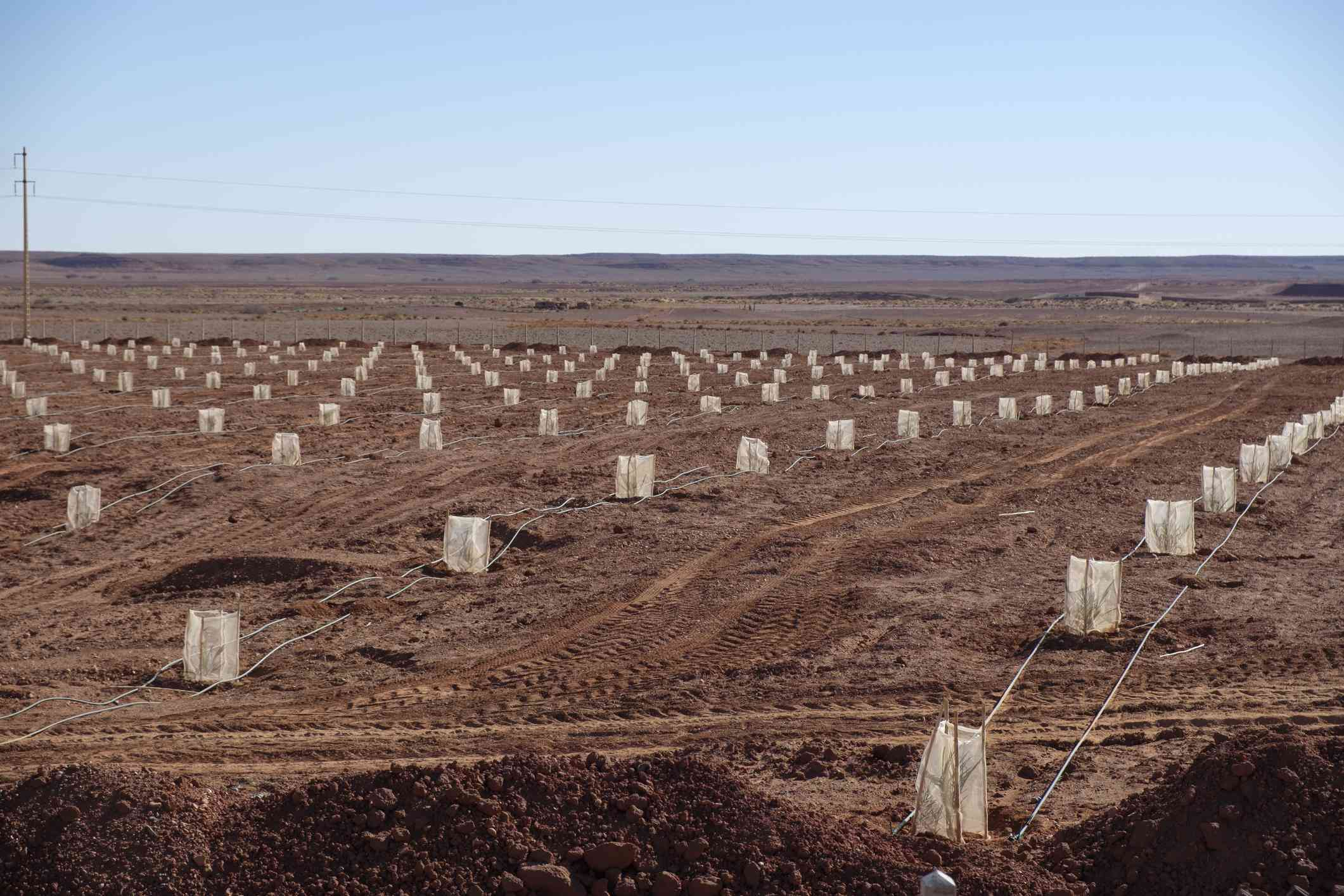 Seedlings in the desert