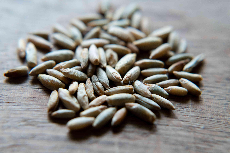 closeup rye seeds on light brown table