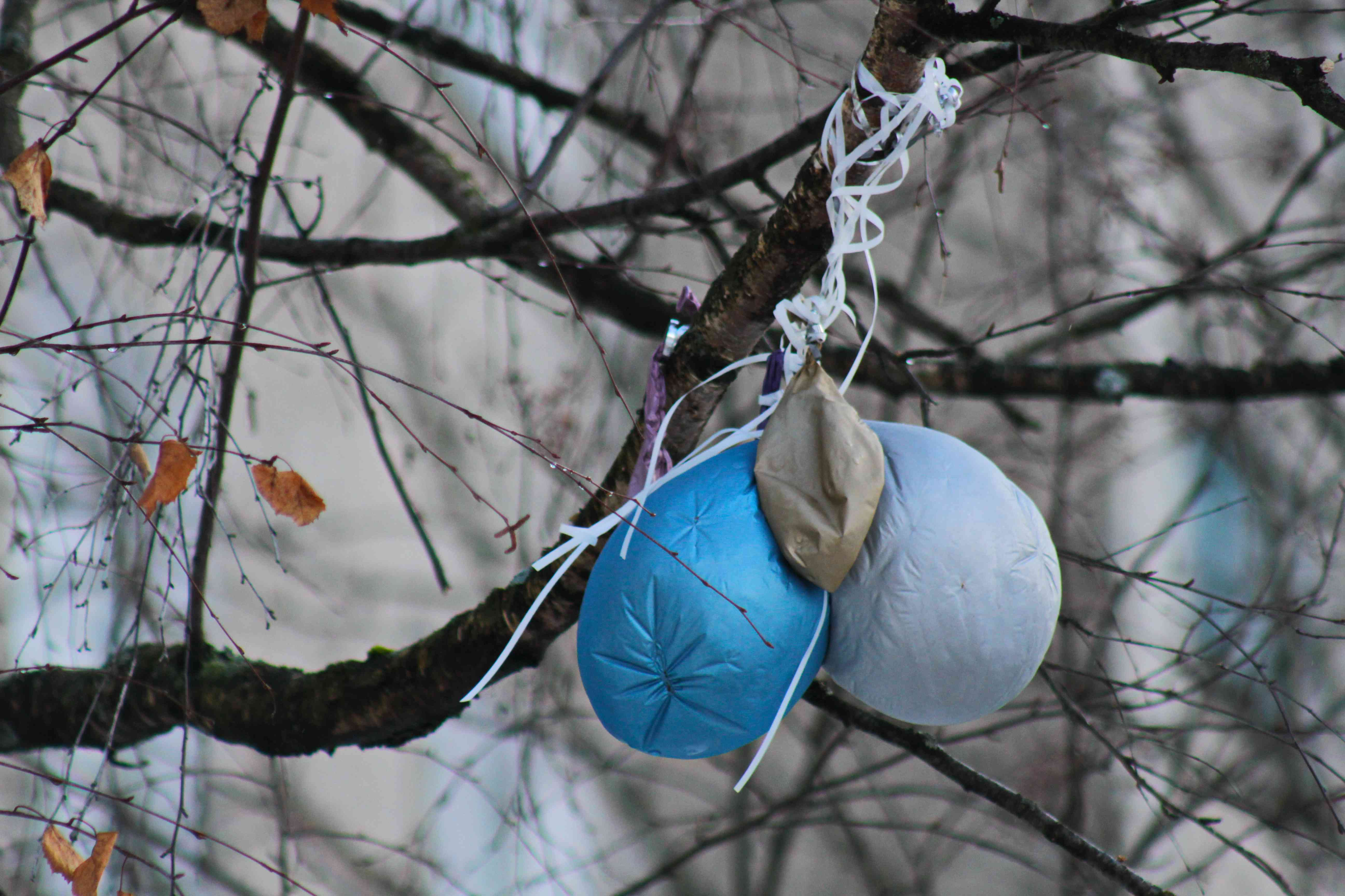 balloons on tree branch, danger to birds and animals