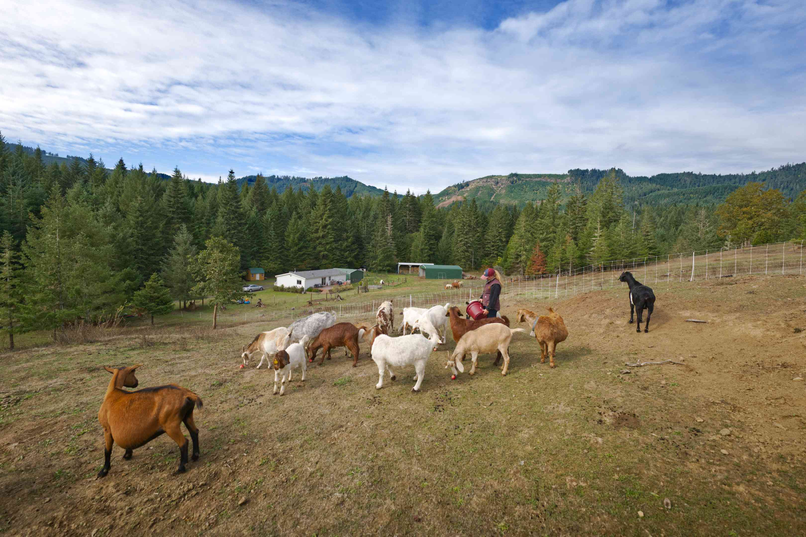large goat pasture with variety of goats with Oregon mountains in background
