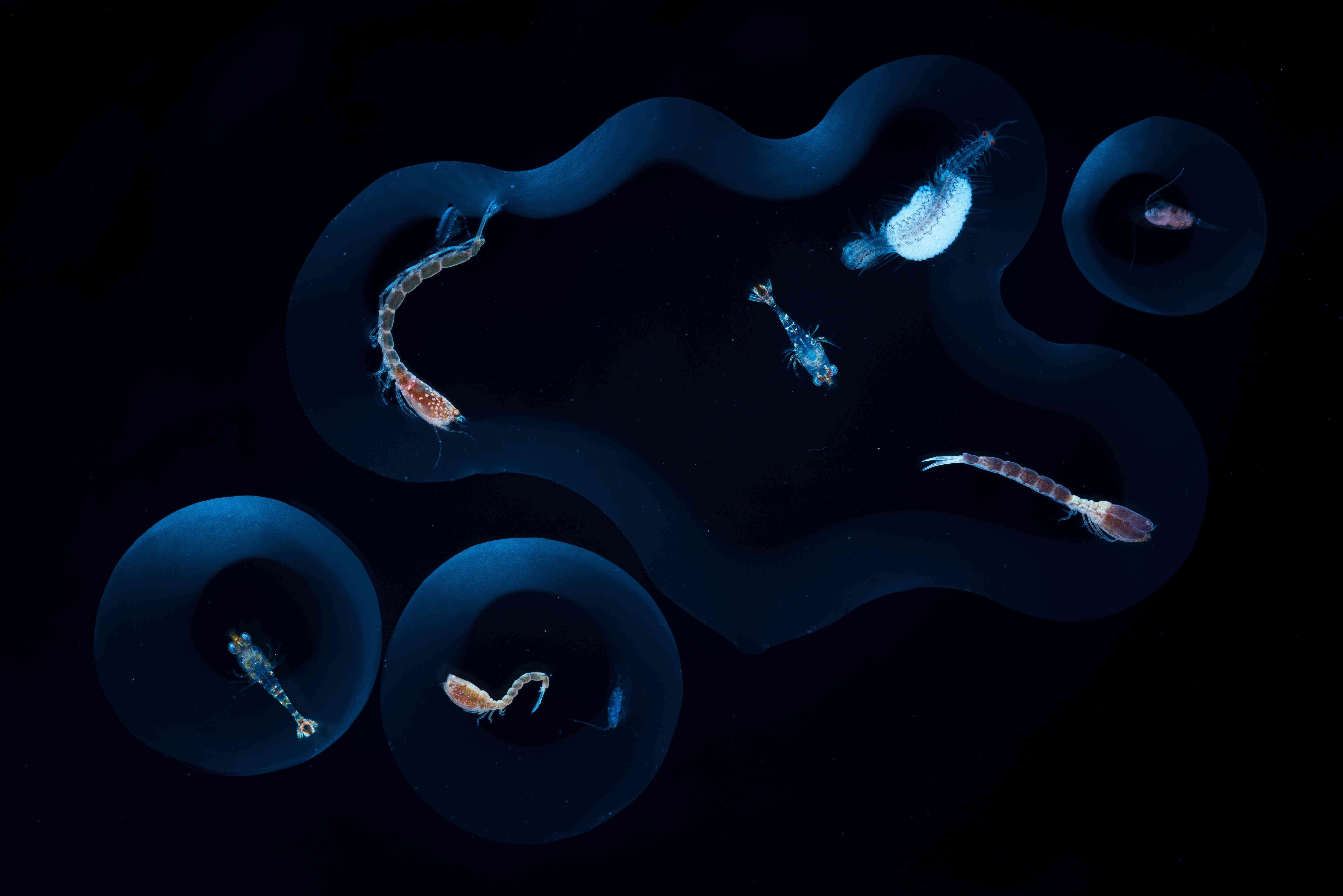 ocean microorganisms