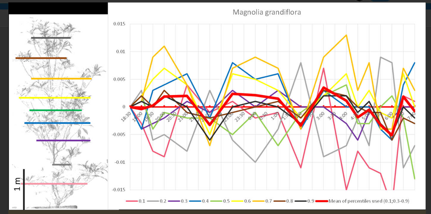 Here is the changing of movement charted in a magnolia tree.