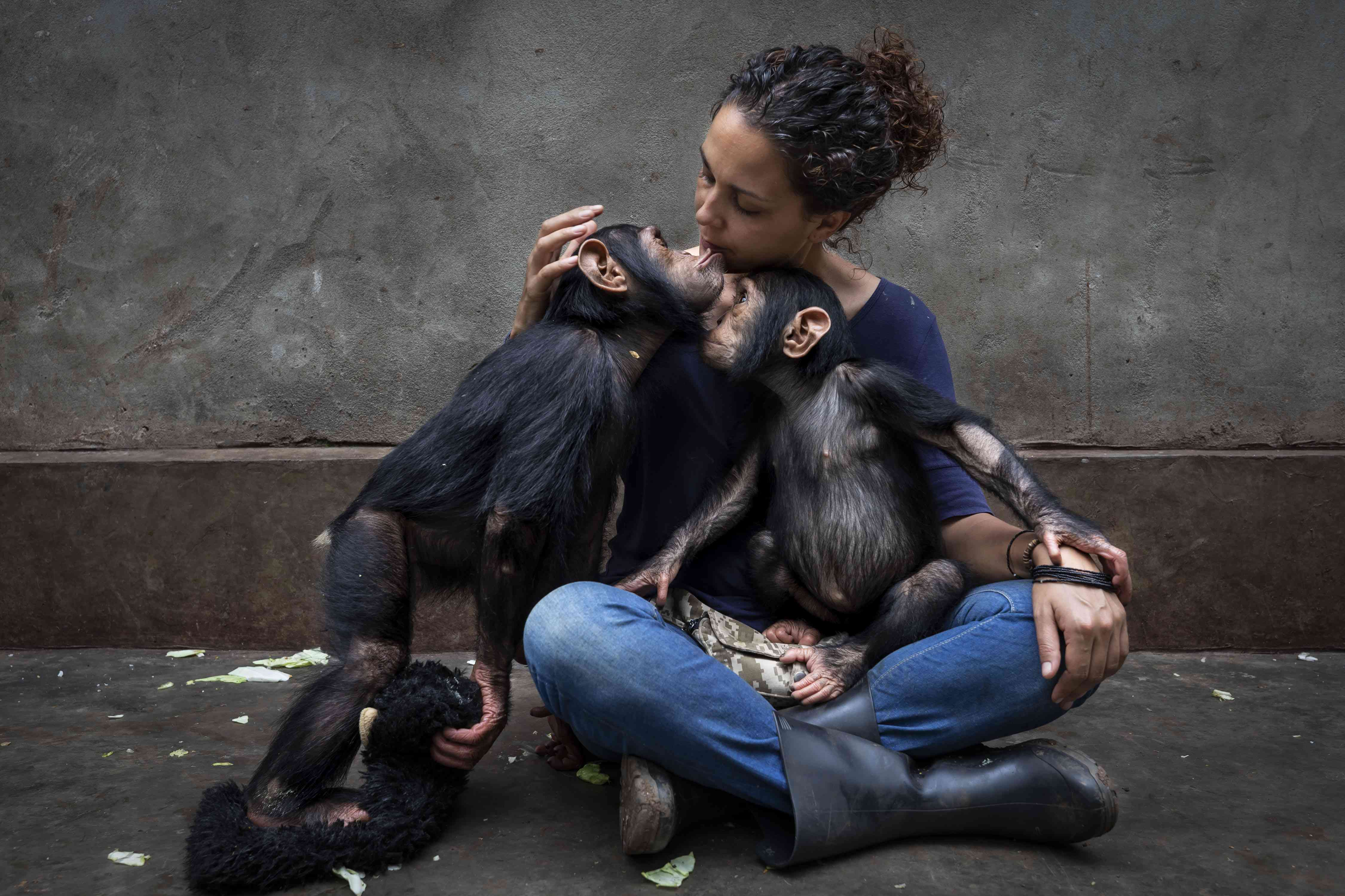 saving chimps in the Congo