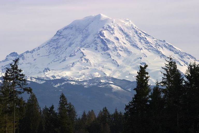 Mount Rainier in the background surrounded by evergreen trees.