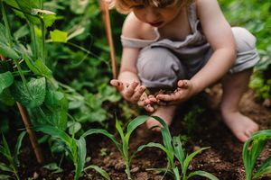 A front view of cute small child outdoors gardening.
