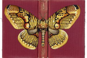 insects painted on book covers Rose Sanderson