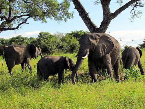 elephants photo.