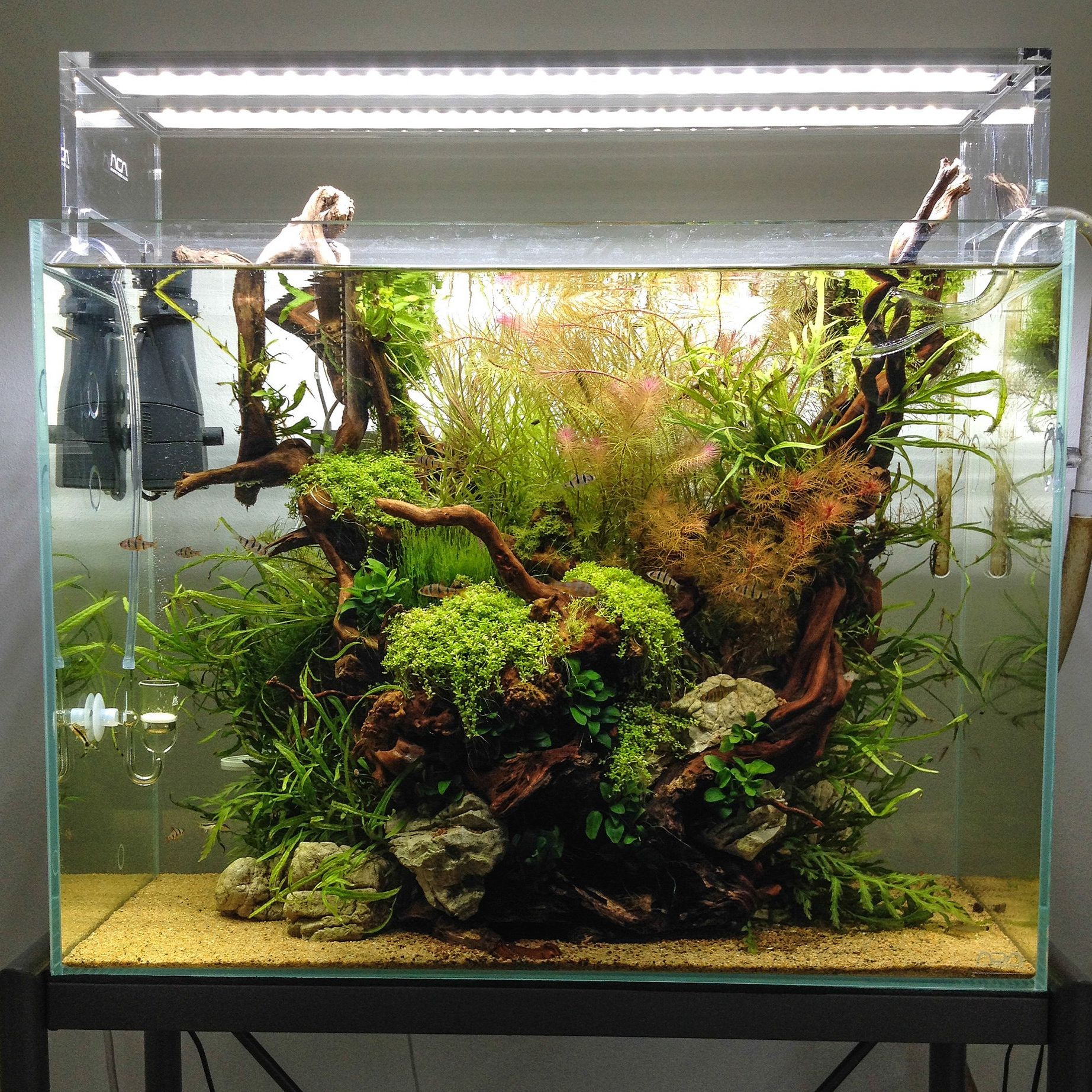 6 Of The Most Clever Home Aquariums