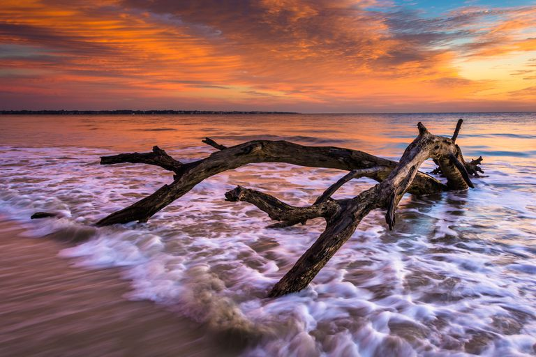 The Surprising Beauty and Benefits of Driftwood