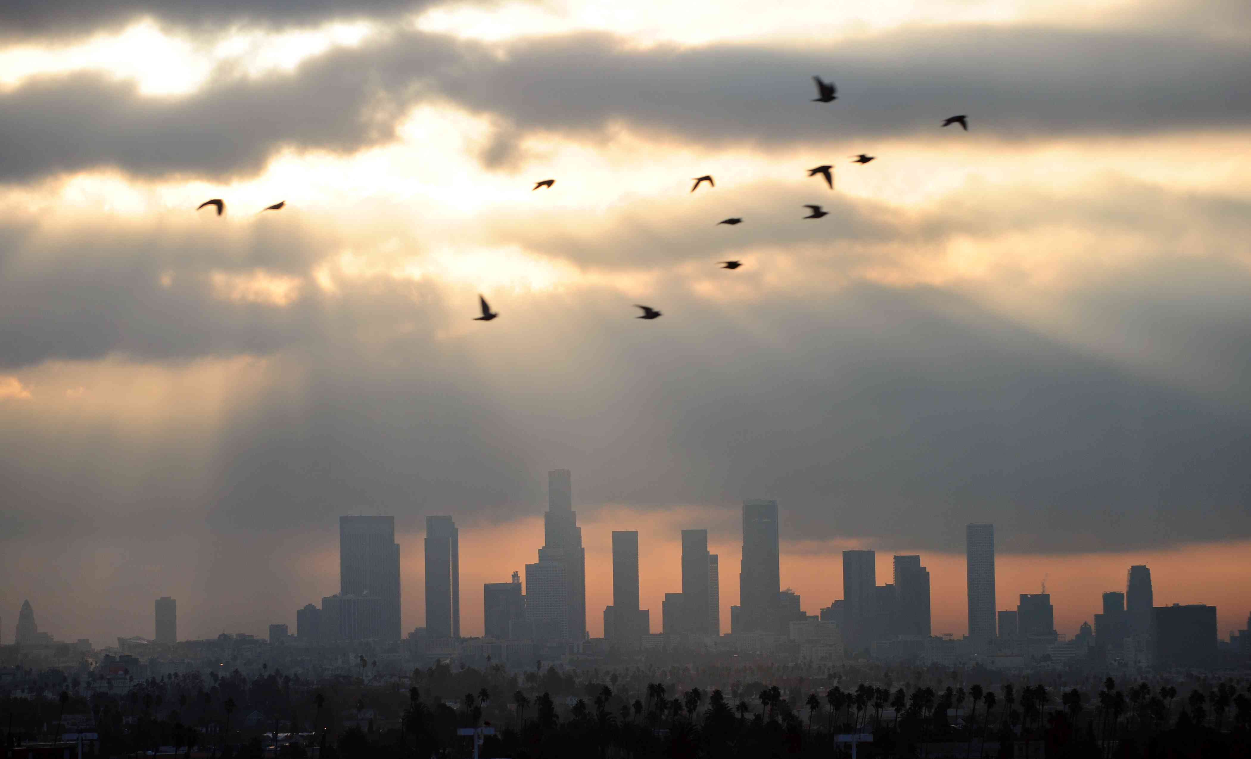 birds flying over Los Angeles