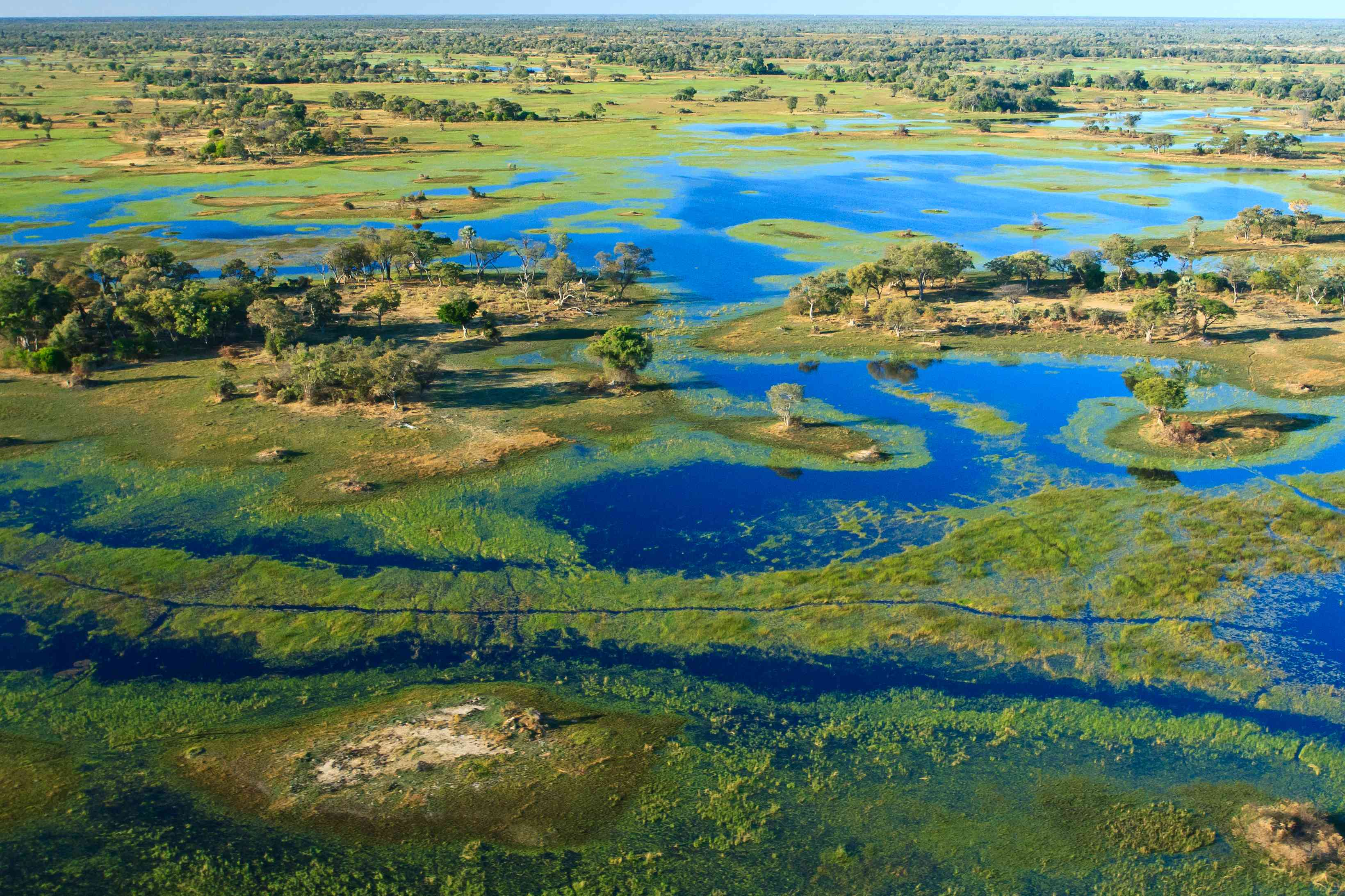 Aerial view of Okavango Delta, an integration of deep blue canals, tree covered island, and marshland