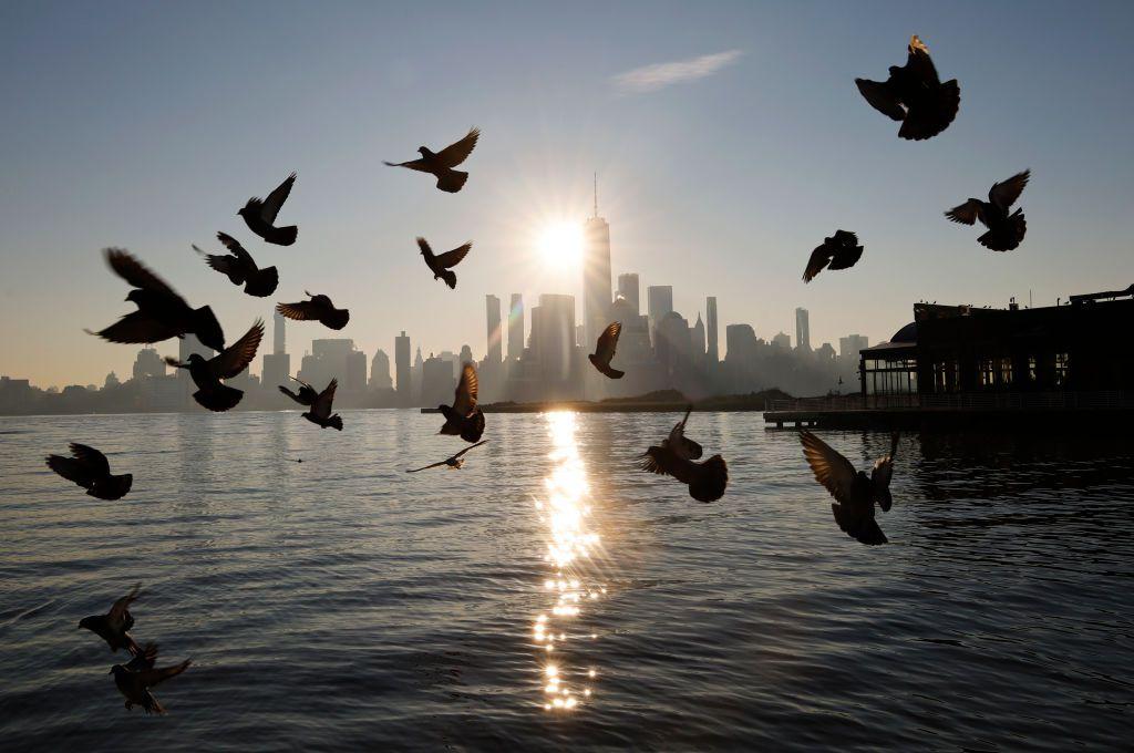 Pigeons in flight over water.