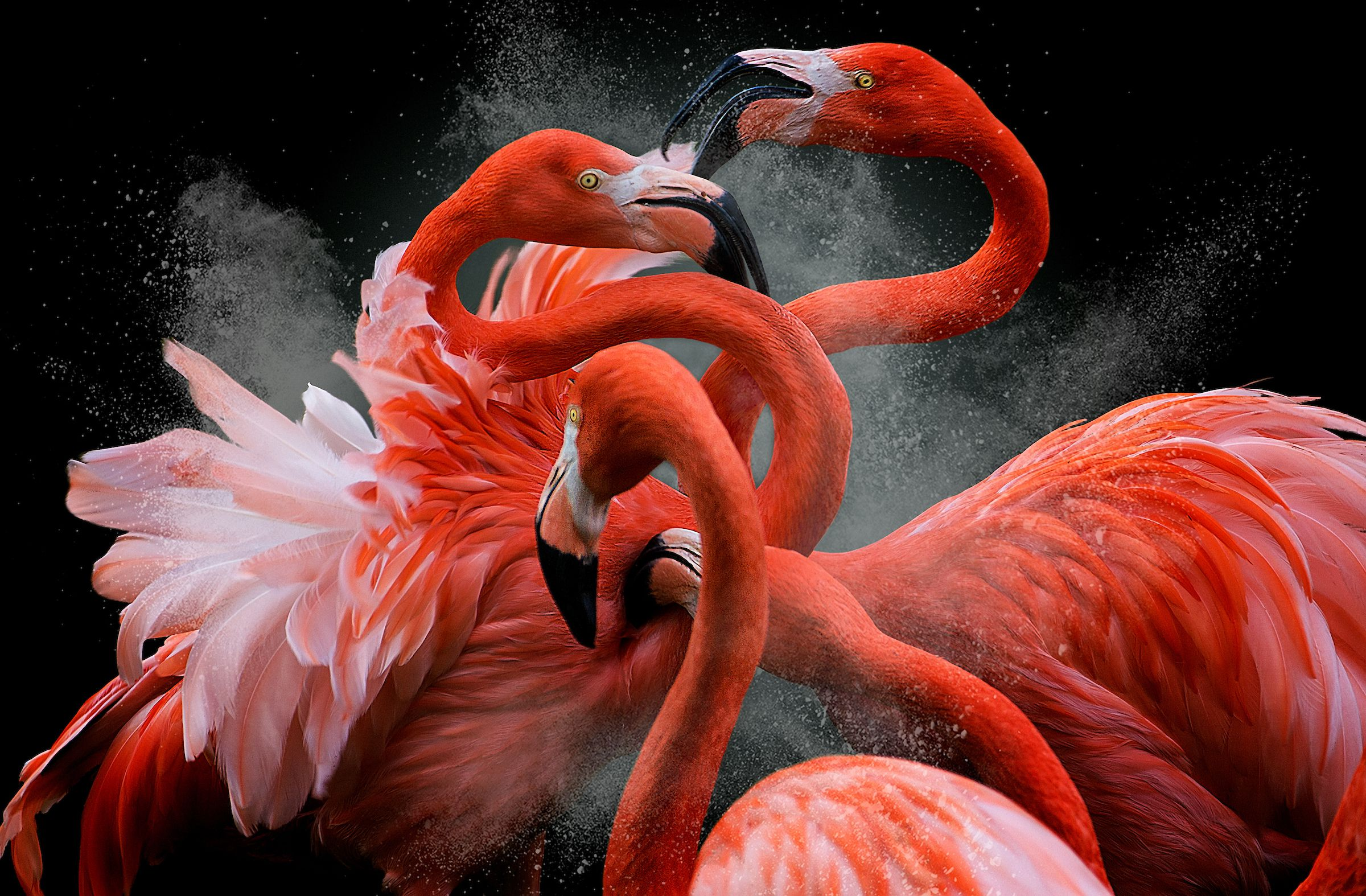 Stunning Images Focus on Birds at Their Finest
